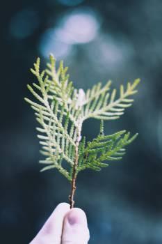 Leaf Plant Fir Free Photo