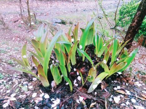 Plant Leaf Garden #137881