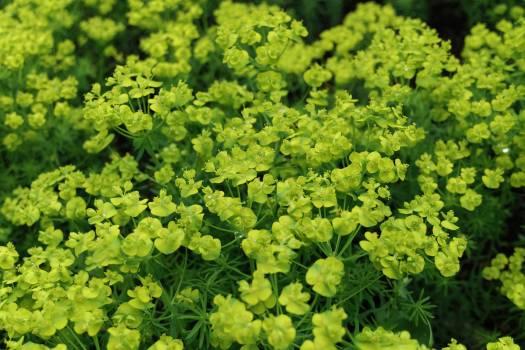 Herb Plant Vascular plant #137907