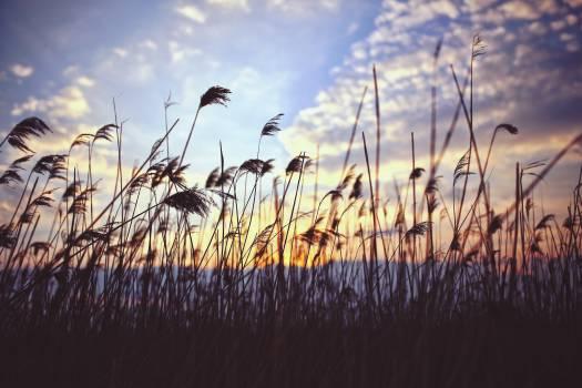 Field Grass Landscape #13795
