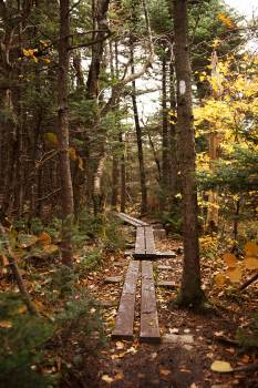 Tree Forest Stile #138177