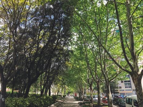 Tree Oak Forest #138223