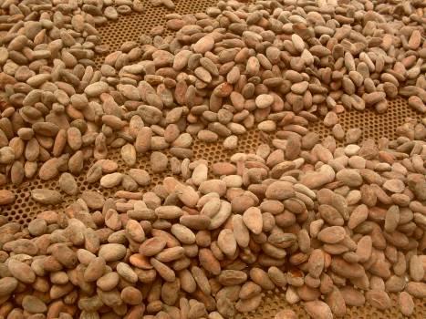 Bean Coffee Brown #138431