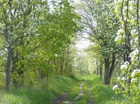 Oak Tree Forest Free Photo