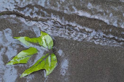 Starfish Water Echinoderm Free Photo