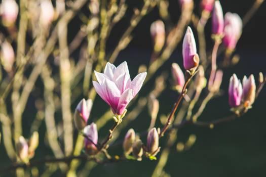 Flower Pink Purple #13872