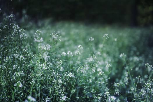 Plant Grass Leaf #13873
