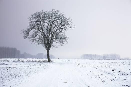 Snow Ice Cold #13894