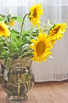Sunflower Flower Yellow #13902