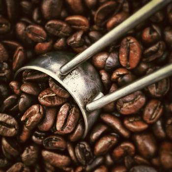 Seed Chocolate Brown #13910