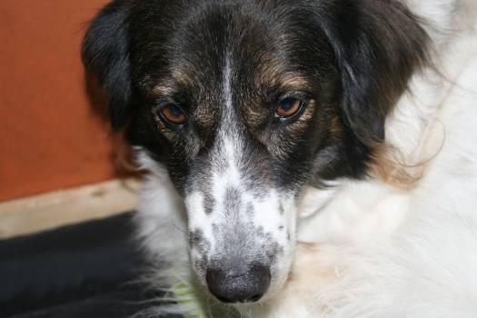 Dog English springer Hunting dog #139173
