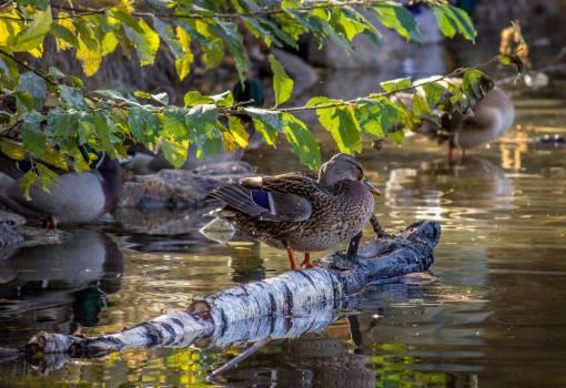 Water snake Snake Bird Free Photo