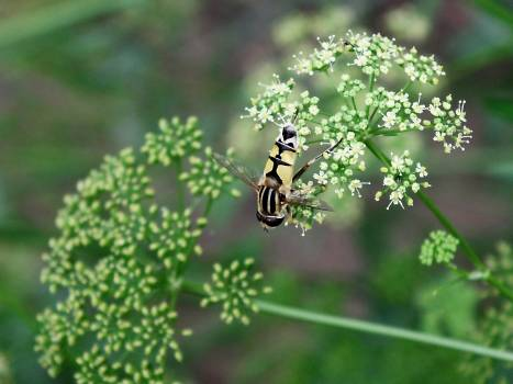 Herb Plant Parsley Free Photo