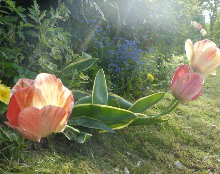 Flower Plant Bud Free Photo