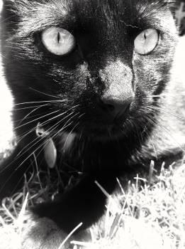Cat Feline Black #139608
