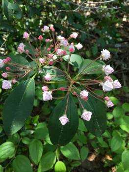 Flower Lilac Plant Free Photo