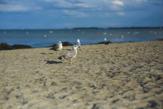 Beach Sand Ocean #13997