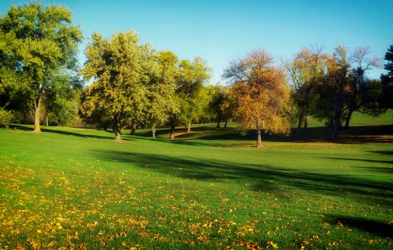 Landscape Grass Tree #14005