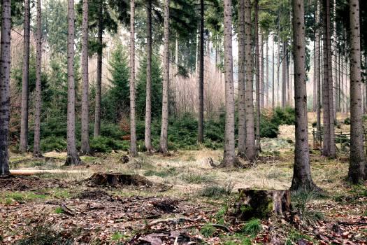 Tree Landscape Forest #14026