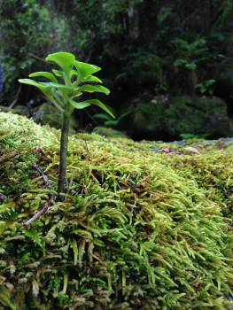 Plant Parsley Leaf Free Photo