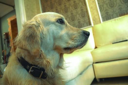 Hunting dog Sporting dog Dog #140551