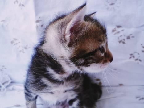 Kitten Young mammal Cat Free Photo