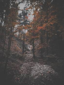 Passage Landscape Forest Free Photo