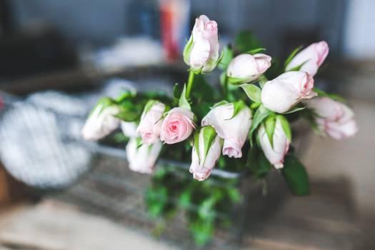 Flower Pink Blossom #14151