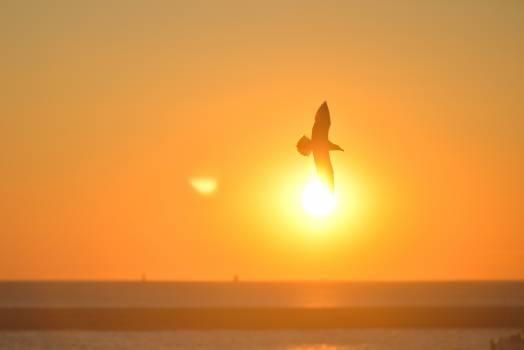 Sunset Sun Sunrise #14158