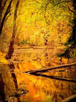 Tree Leaf Season #14167
