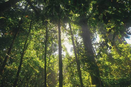 Tree Oak Forest #14186