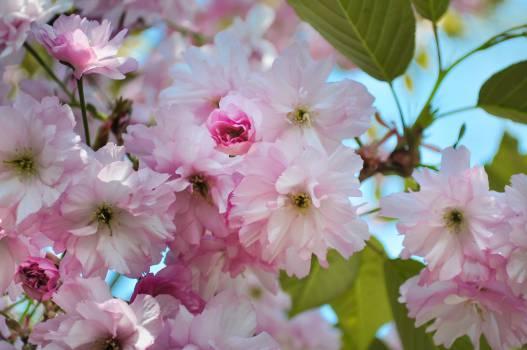 Pink Flower Petal #14193