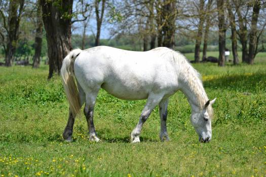 Horse Grassland Grey Free Photo
