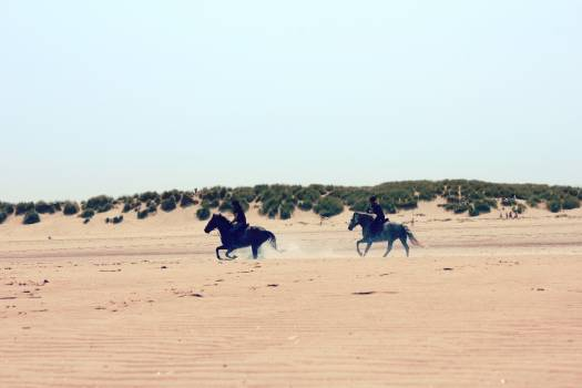 Camel Dune Sand #142168