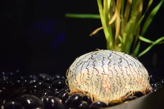 Turtle Food Gastropod Free Photo