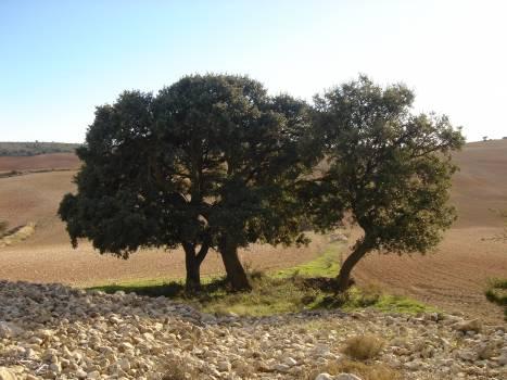 Tree Woody plant Cork-tree #142241
