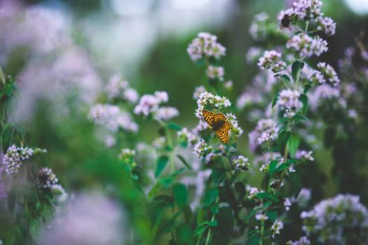 Flower Plant Blossom #14234
