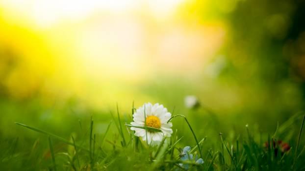 Dandelion Herb Plant #142576