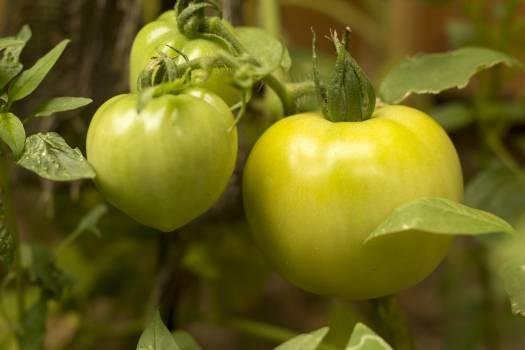Fruit Edible fruit Apple #142586