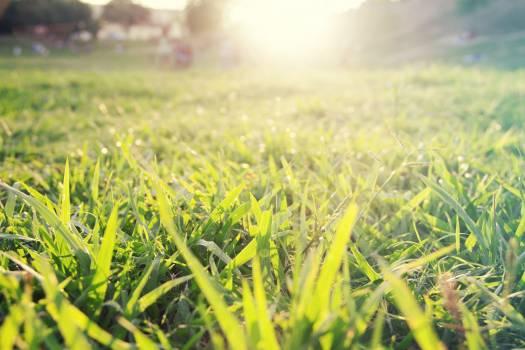 Field Grass Meadow Free Photo