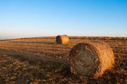 Feed Hay Fodder #14308