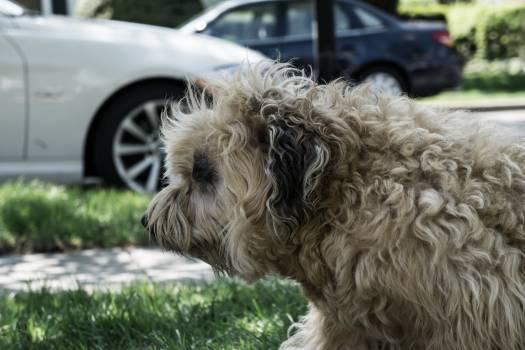 Terrier Hunting dog Dog #143160