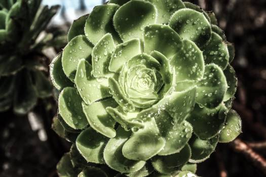Cabbage Herb Lettuce Free Photo