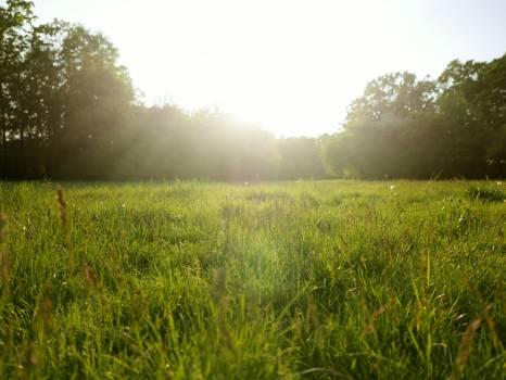 Field Grass Grassland Free Photo