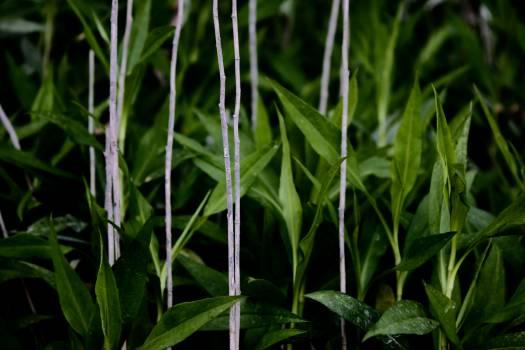 Plant Vascular plant Grass Free Photo