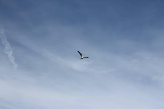 Albatross Bird Seabird #14337