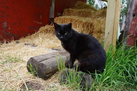 American black bear Bear Cat #143549