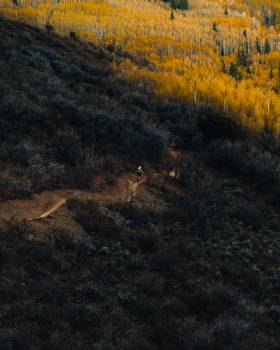 Texture Tree Landscape Free Photo