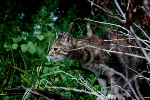 Cat Feline Lynx Free Photo