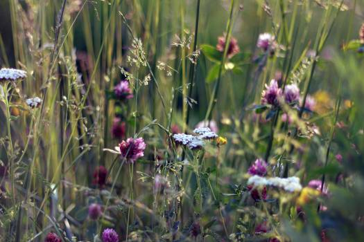 Flower Bulb Herb #14398